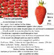 FRUITS_exotic/fruits_baie_fraise_gariguette.jpg