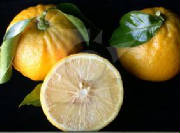 glossary_o/fruit-orange_bergamotte.jpg